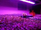 9A - Induction Grow Lights